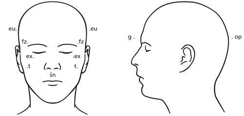 diagram of human head from front view and side view